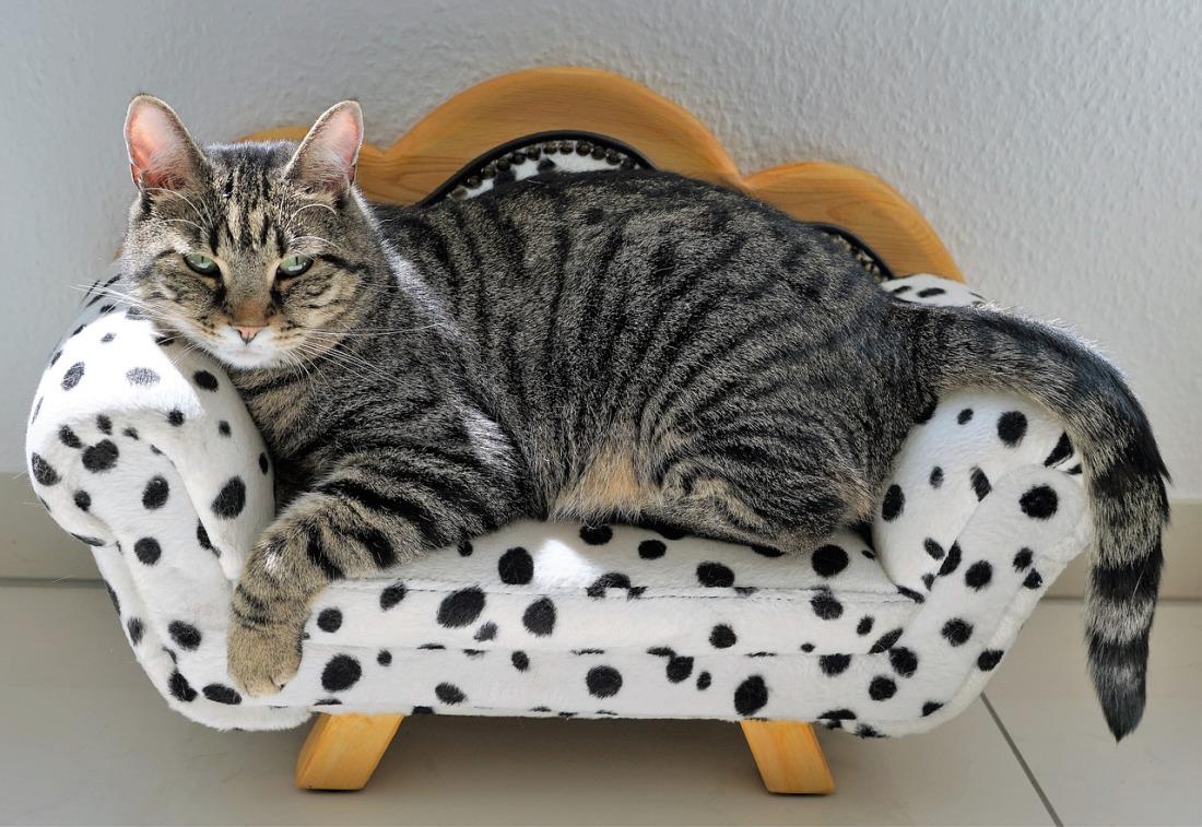 cat-2525277_1280